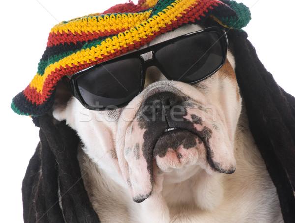 Vicces kutya paróka fehér arc fiatal Stock fotó © willeecole