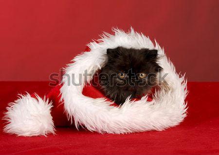 śmiechem nowa fundlandia szczeniak Święty mikołaj płaszcz Zdjęcia stock © willeecole