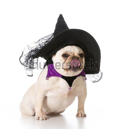 dog dressed up as cowgirl Stock photo © willeecole