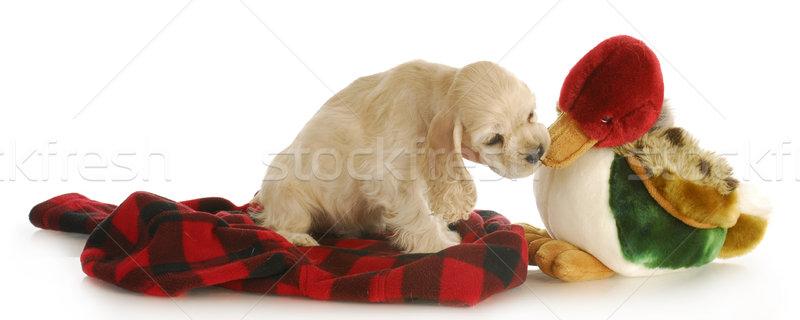 Jachthond aanbiddelijk puppy kauwen gevuld eend Stockfoto © willeecole