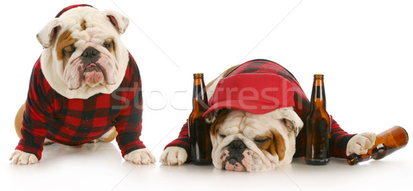 drunk as a dog Stock photo © willeecole
