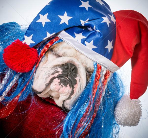 Amerikai kutya angol bulldog visel hazafias Stock fotó © willeecole