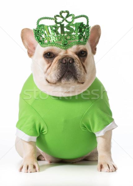 Festa di San Patrizio cane francese bulldog moda sfondo Foto d'archivio © willeecole