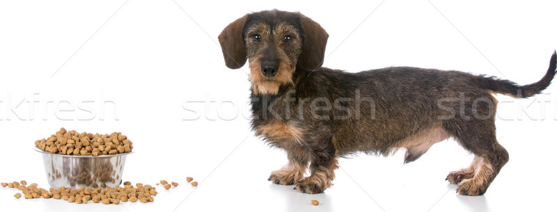 feeding the dog  Stock photo © willeecole