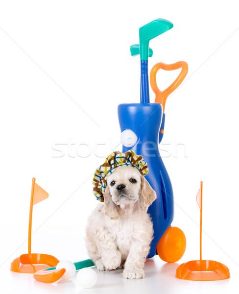 Hond spelen golf amerikaanse puppy speelgoed Stockfoto © willeecole