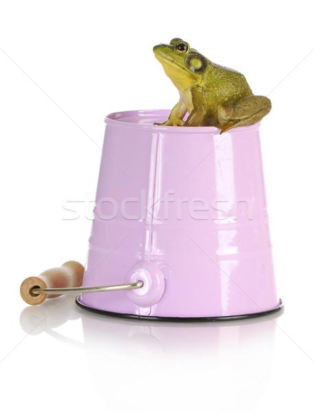 bull frog Stock photo © willeecole