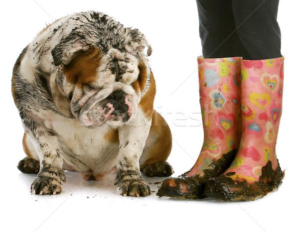 Foto stock: Sucia · botas · perro · fangoso · Inglés · bulldog