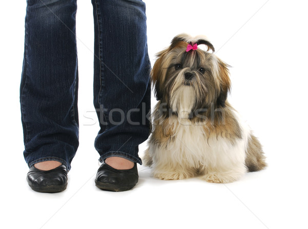 puppy sitting beside owner Stock photo © willeecole