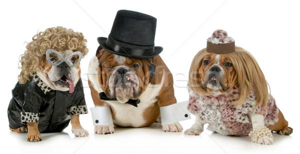 Szerencsés férfi férfiak bulldog kettő nők Stock fotó © willeecole