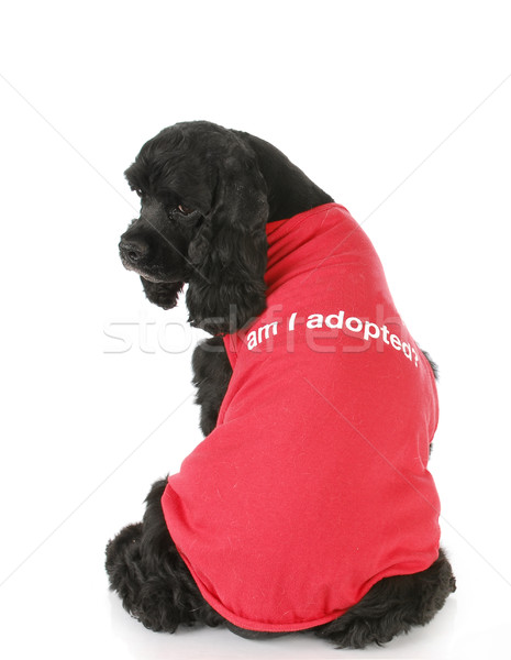 Haustier Verabschiedung tragen Shirt bin Porträt Stock foto © willeecole