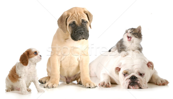 Stock photo: dog and cat fight