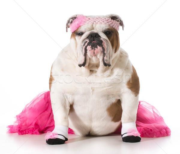 Stock photo: dog ballerina