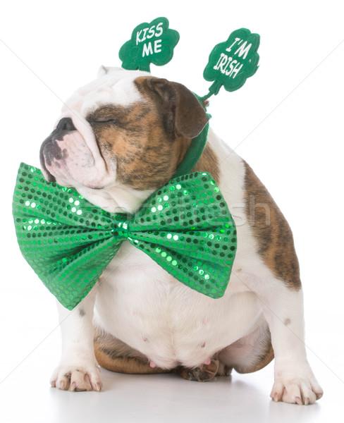St Patricks day dog Stock photo © willeecole
