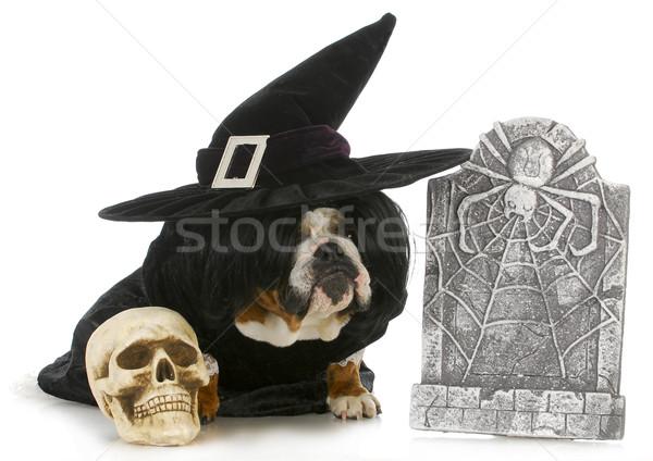 Halloween Hund Englisch Bulldogge up wie Stock foto © willeecole