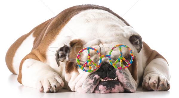 peaceful dog Stock photo © willeecole