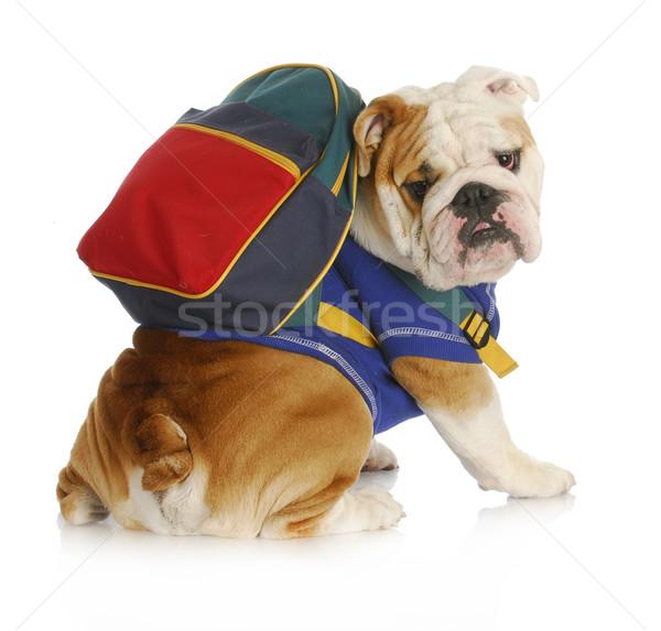 Köpek itaat okul İngilizce buldok Stok fotoğraf © willeecole