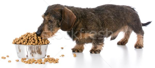 Stockfoto: Hond · miniatuur · teckel · permanente · kom