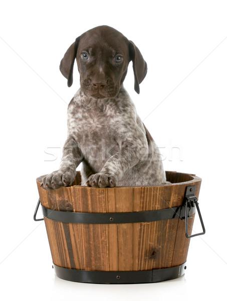 Foto d'archivio: Cucciolo · bagno · lavare · isolato · bianco · baby