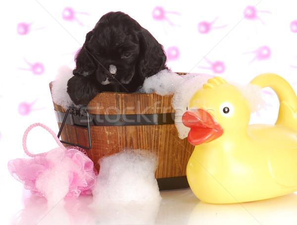 Foto d'archivio: Cucciolo · bagno · tempo · americano · felice · nero