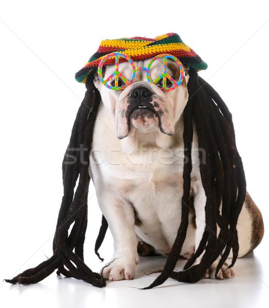 Vicces kutya paróka béke szemüveg fehér Stock fotó © willeecole