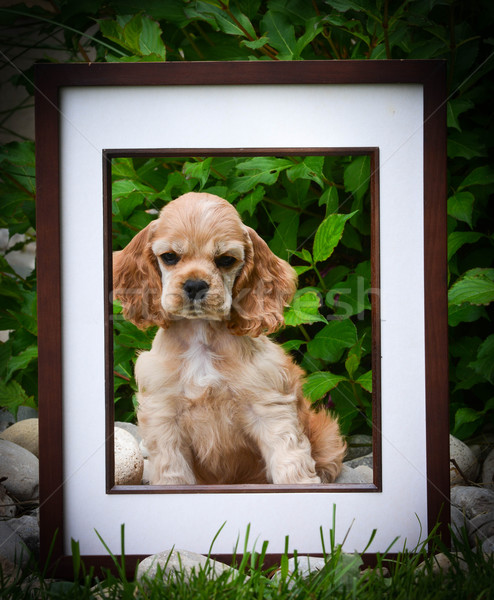 picture perfect puppy Stock photo © willeecole