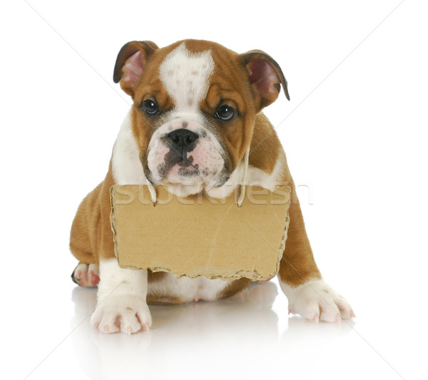 puppy with a message Stock photo © willeecole