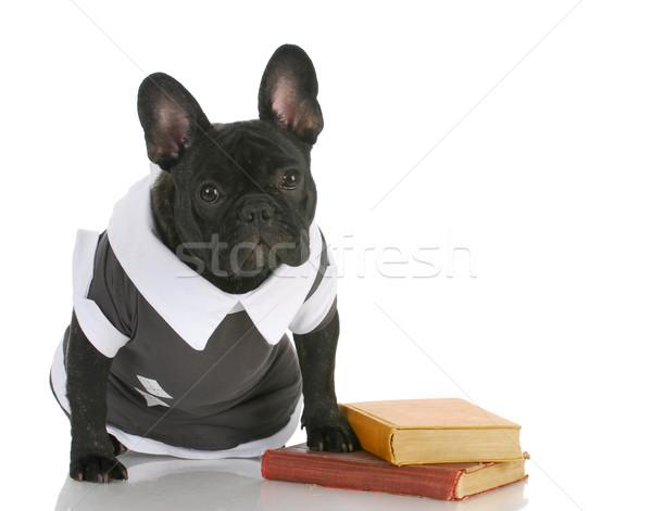 Köpek itaat okul fransız buldok Stok fotoğraf © willeecole
