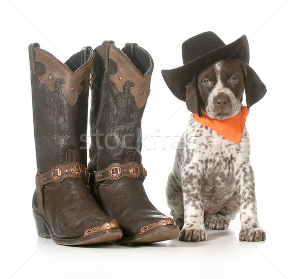 country dog Stock photo © willeecole