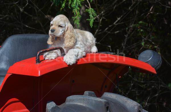 çiftlik köpek köpek yavrusu çamurluk traktör Stok fotoğraf © willeecole