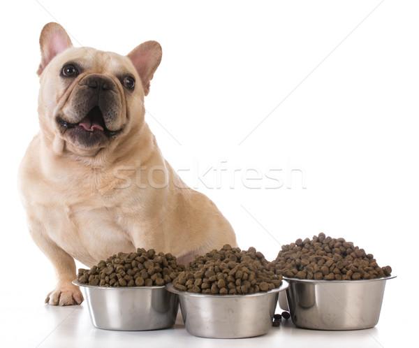 Etetés kutya francia bulldog ül vmi mellett Stock fotó © willeecole