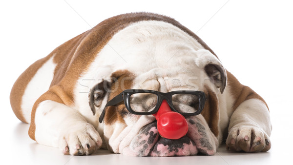 Stock photo: funny dog