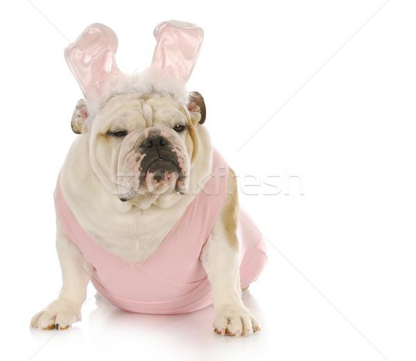 easter dog Stock photo © willeecole