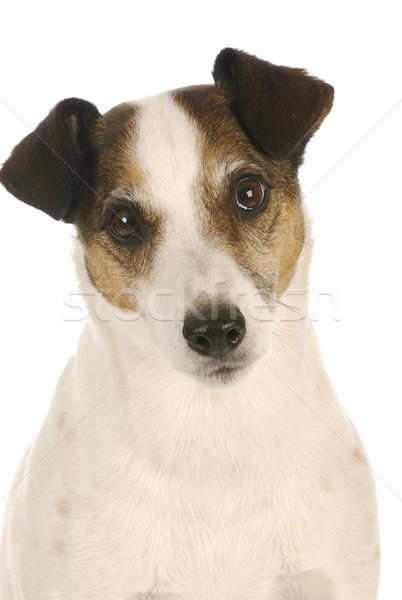 Stock photo: cute dog