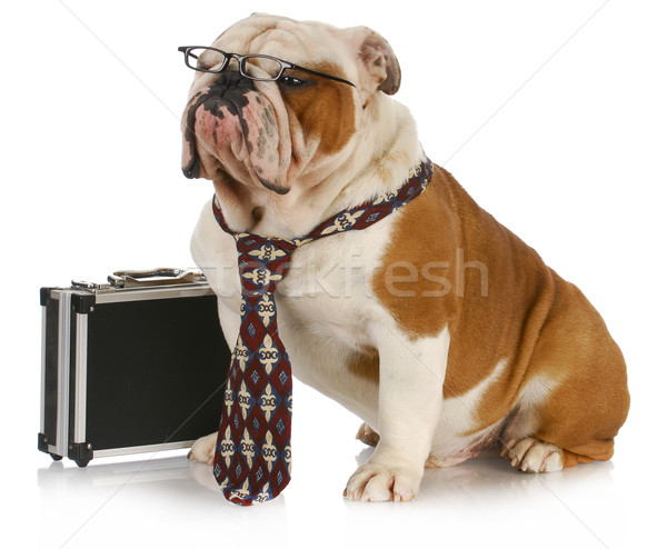 business dog Stock photo © willeecole