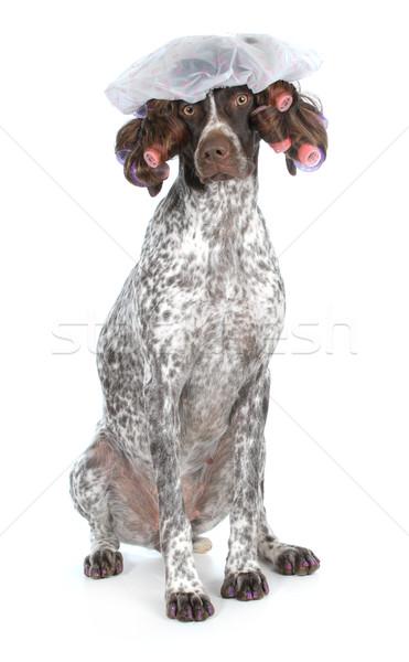 dog grooming Stock photo © willeecole