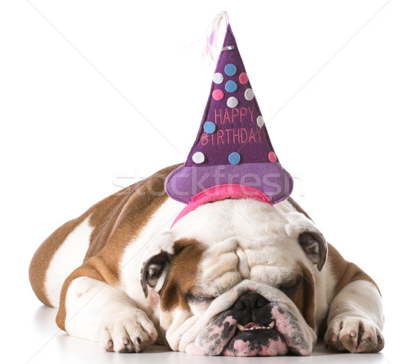 Stock photo: birthday dog