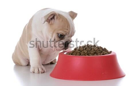 Chien brut chiens dîner viande Photo stock © willeecole