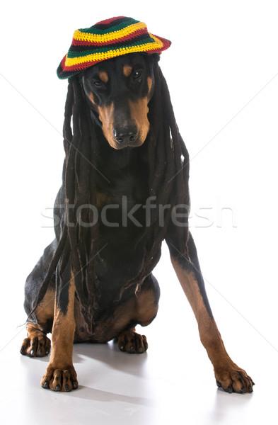 Hond kostuum doberman partij gezicht zwarte Stockfoto © willeecole