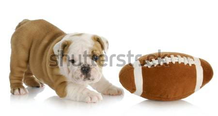 Stock photo: sports hound