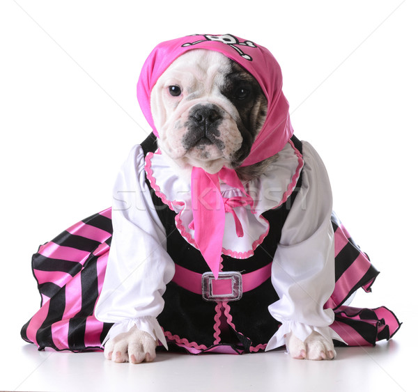pirate puppy Stock photo © willeecole