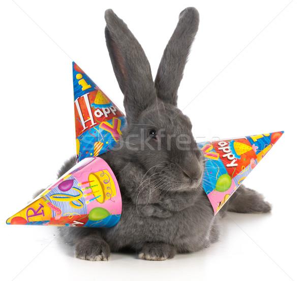 birthday rabbit Stock photo © willeecole