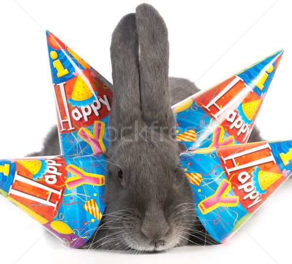 birthday bunny Stock photo © willeecole