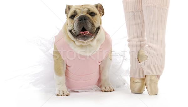 dancing dog Stock photo © willeecole