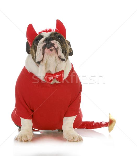 bad dog Stock photo © willeecole