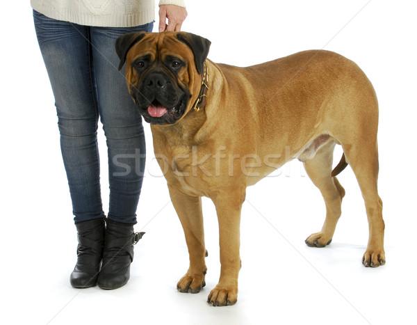 woman with big dog Stock photo © willeecole