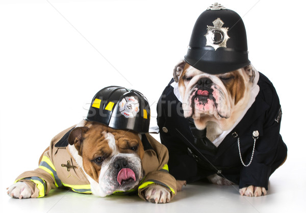 Cão bombeiro policial para cima branco olhos Foto stock © willeecole