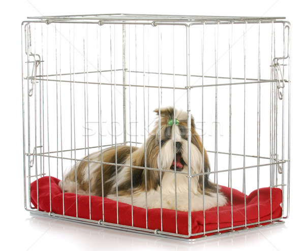 dog in a crate Stock photo © willeecole