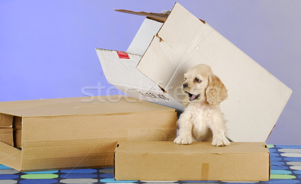puppy with boxes Stock photo © willeecole