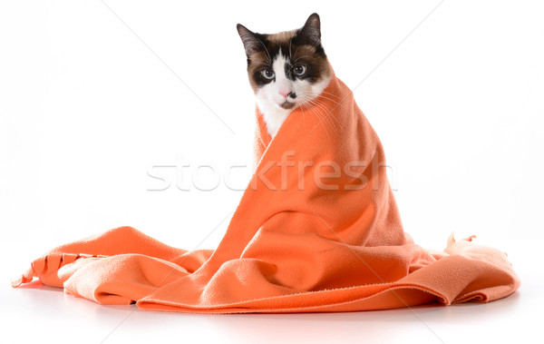 cat under cover Stock photo © willeecole