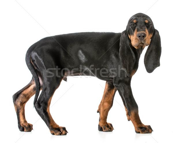 Stock fotó: Kutya · kacsintás · fekete · barna · bőr · szem · állat